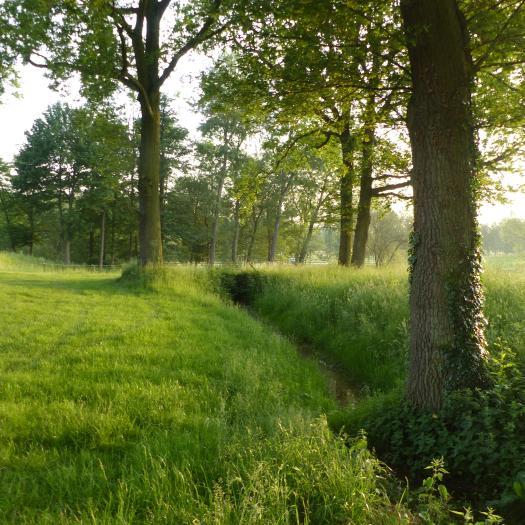 Chênaie-charmaie relictuelle - Golf National (Guyancourt, Yvelines) © Océane Roquinarc'h