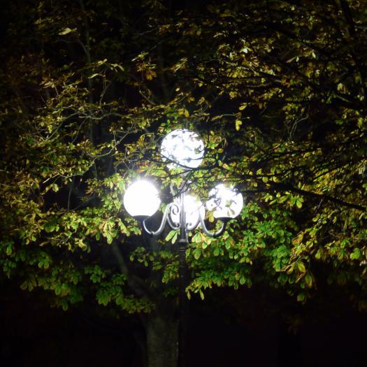 """La lumière artificielle perturbe la flore en modifiant les rythmes biologiques. En ville, ce phénomène est accentué car les feuillages sont souvent à hauteur des lampadaires. D'une manière générale, les lampadaires de type """"boules"""", qui diffusent la lumière vers le ciel, sont à proscrire. © Romain Sordello"""