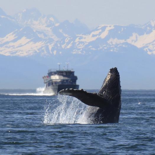 baleine et bateau