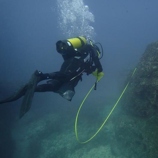 Transect de suivi des habitats benthiques - Thibaut de Bettignies