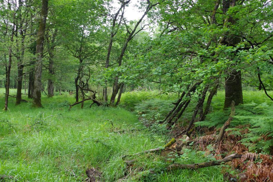 Landes de la forêt de Preuilly (ZNIEFF 240006243) © V. Demougin