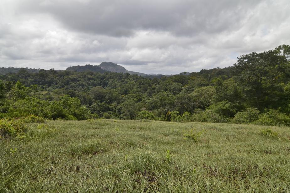 Massif du Mitaraka et Tchoukouchipann, Guyane (ZNIEFF 030120062) © Julien Touroult