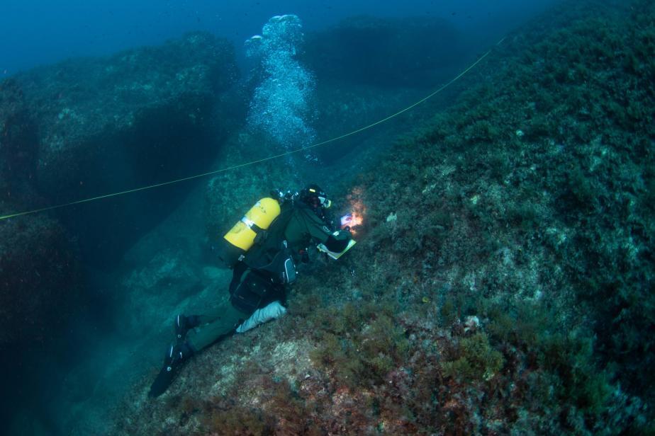 Transect d'étude d'habitat benthique en plongée - J. Utge