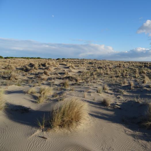 Dunes de l'Espiguette © Paul Rouveyrol