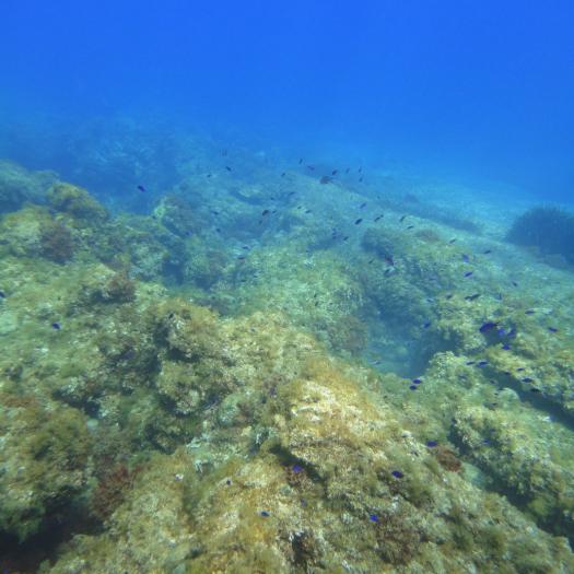 CH 1170-13 La roche infralittorale à algues photophiles (Méditerranée) © N. MICHEZ