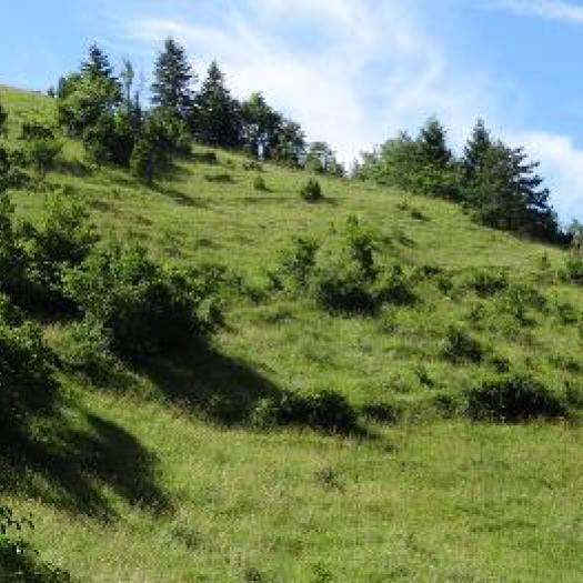 Habitat 6210 - Pelouses sèches semi-naturelles et faciès d'embuissonnement sur calcaires (Festuco-Brometalia) © P. Rouveyrol