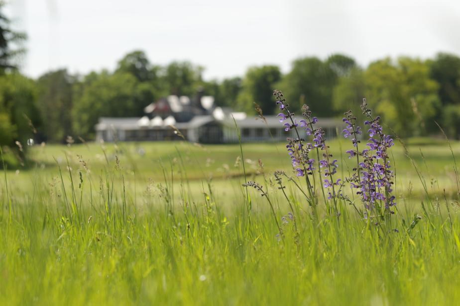 Sauge des prés (Salvia pratensis) - Golf de Chantilly (Vineuil-Saint-Firmin, Oise) © Océane Roquinarc'h