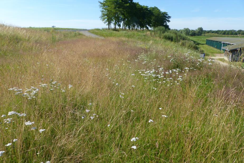 Prairie de fauche - Golf National (Guyancourt, Yvelines) © Emeline Oulès