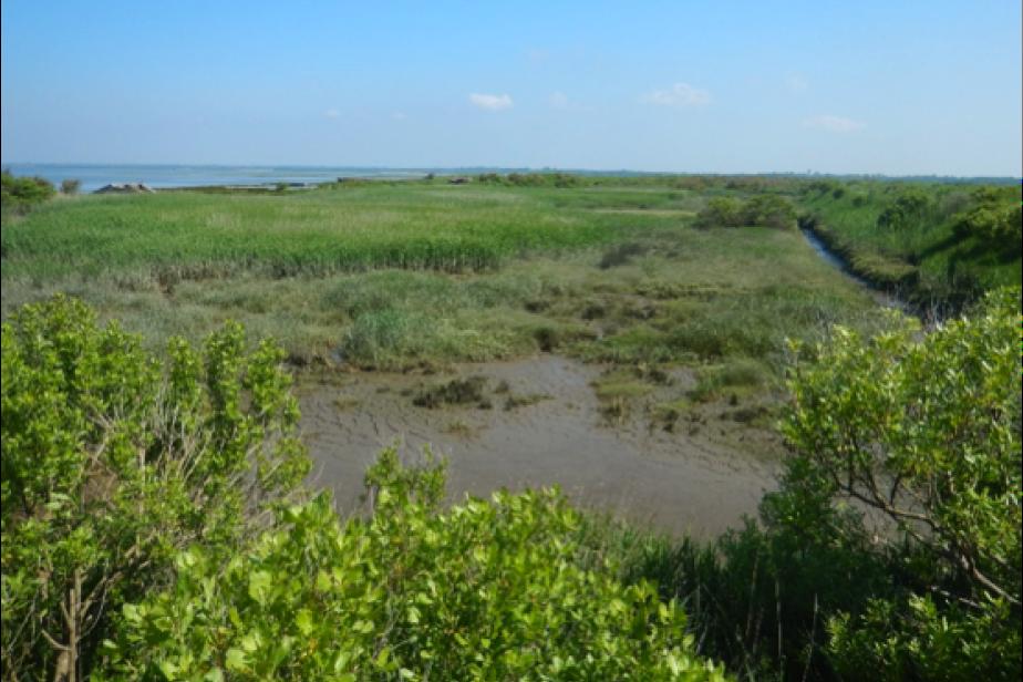 Site dépoldérisé « naturellement » au bord du bassin d'Arcachon © G. Gayet