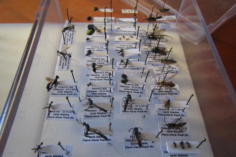 Échantillons d'hyménoptères collectés dans une logique d'inventaire généralisé de la biodiversité © Philippe GOURDAIN