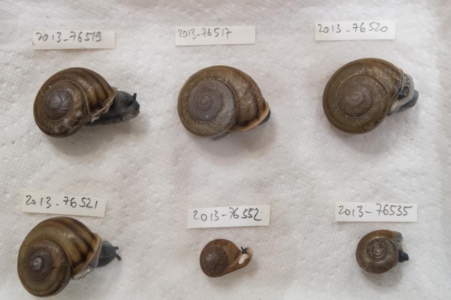 Mollusques terrestres barcoding - Jean Ichter