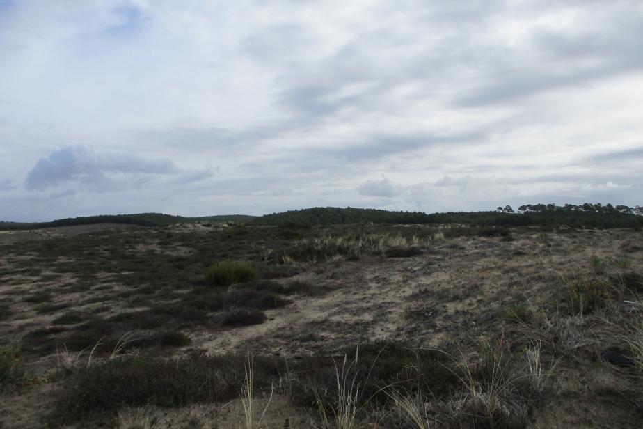 Pelouse sableuse de Biscarrosse - DGA