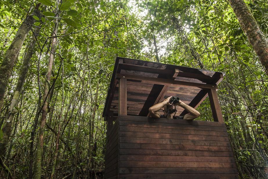 cabane-dobservation-sentier-du-site-de-nidification-du-coq-de-roche-p-o_jay_bd.jpg