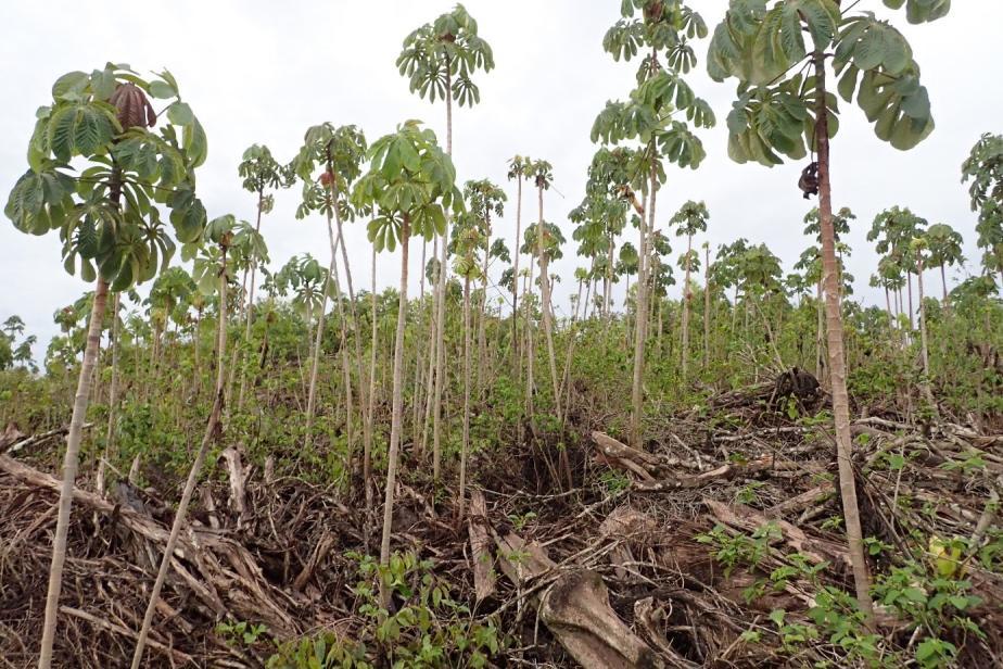 test reforestation © S Forero